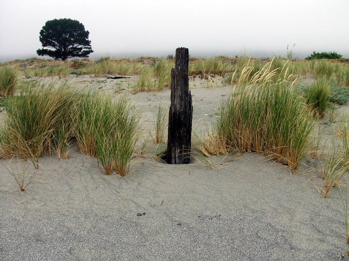 Dune area west end of Stinson Beach