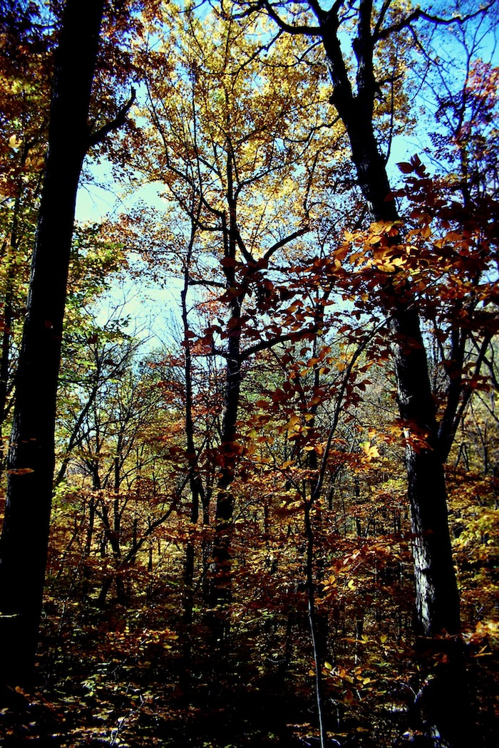 Fall foliage Vorhees State Park, NJ