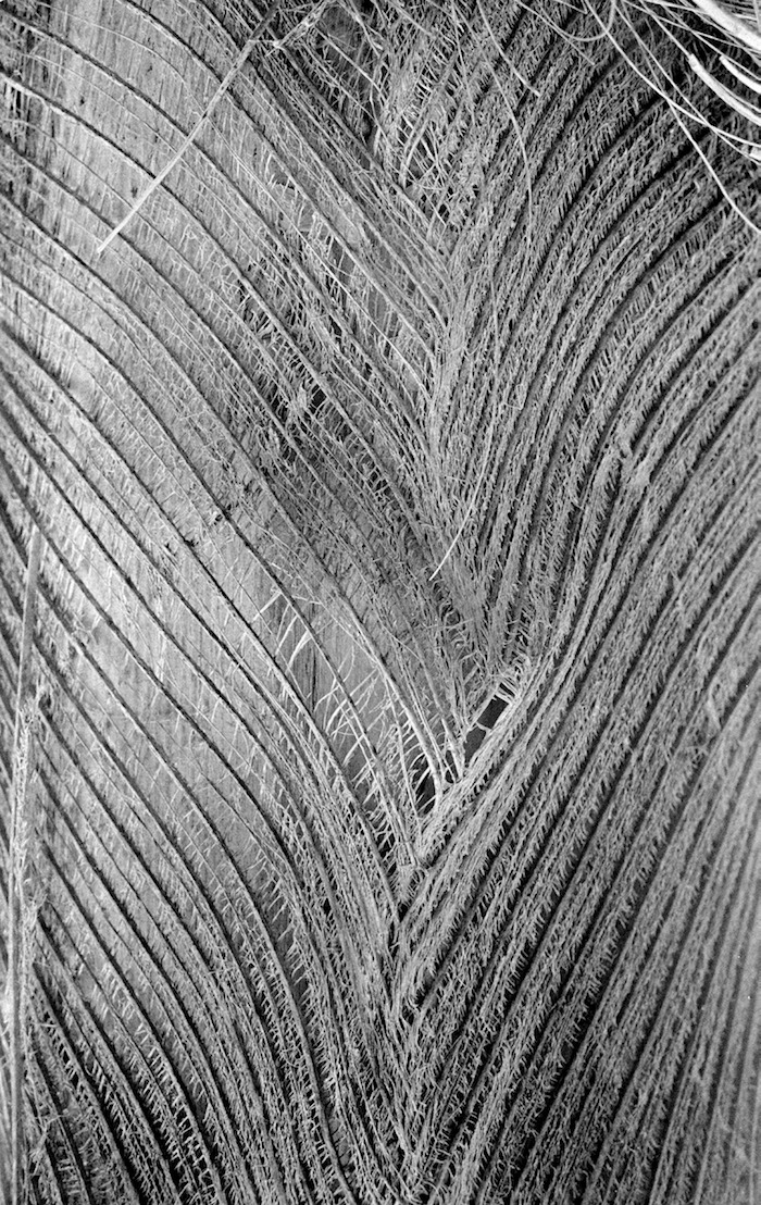 Palm frond pattern, Coral Gables, FL